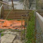 Privacyscherm van leiplatanen door Groenwerk boomverzorging Amsterdam-noord