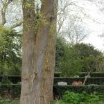 Plakoksel onderaan de stam van boom.