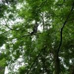 snoei van volwassen boom