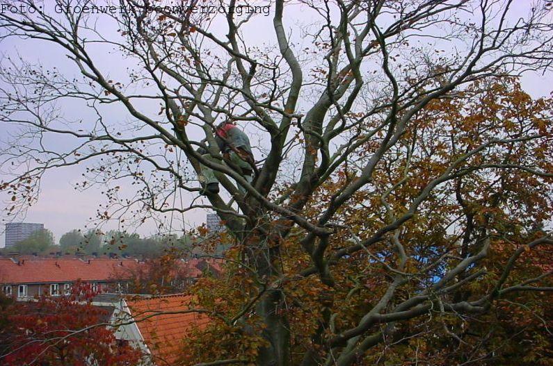 Werken in bomen
