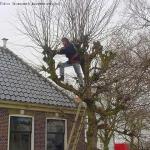 Leilinden snoeien door Groenwerk boomverzorging in Amsterdam-noord