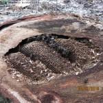 Nest van honingbijen