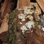Paddestoelen op hout