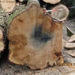 Zwarte vlek in stamdoorsnede boom.