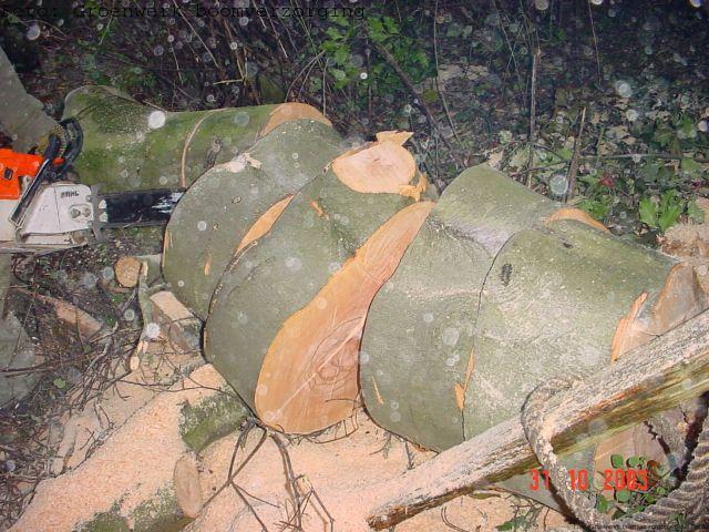 zeer grote boom