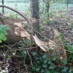 Afgebroken boom - VTA boomcontrole