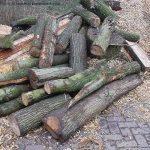 Het is verboden ongeschild iepenhout te bezitten of te vervoeren.