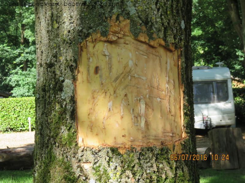 Door vandalisme beschadigde boom.